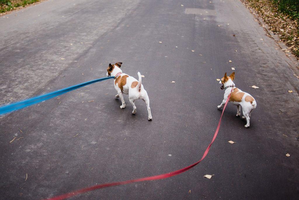 Услуга выгула собак как бизнес идея
