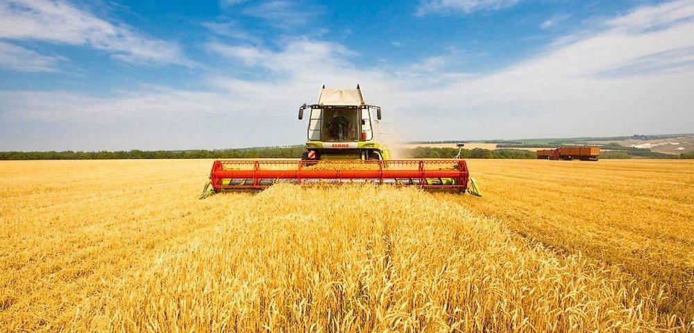 Зерновые бизнес-идеи в России