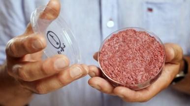 Бизнес идея Выращивание мяса в лаборатории