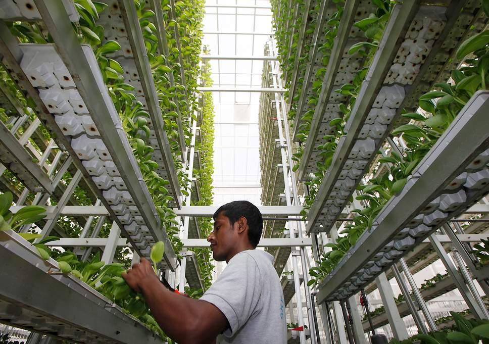 бизнес идея Вертикальное земледелие