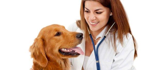 Бизнес идея Ветеринарный Бизнес
