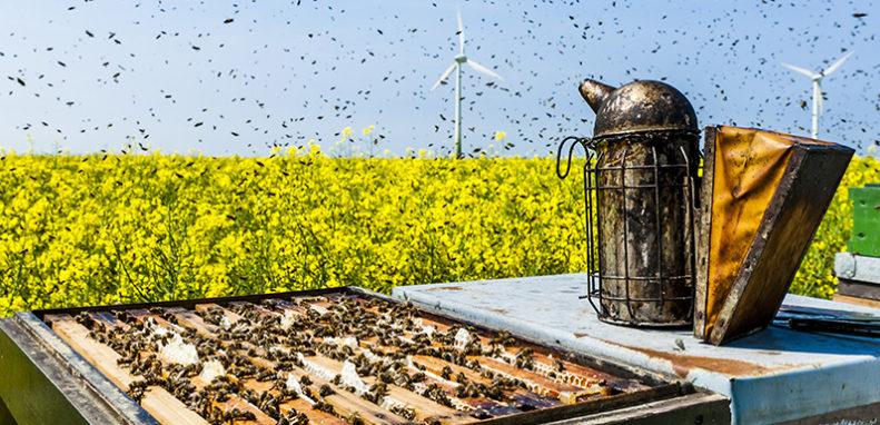 Как реализовать бизнес-план запуска пчеловодства