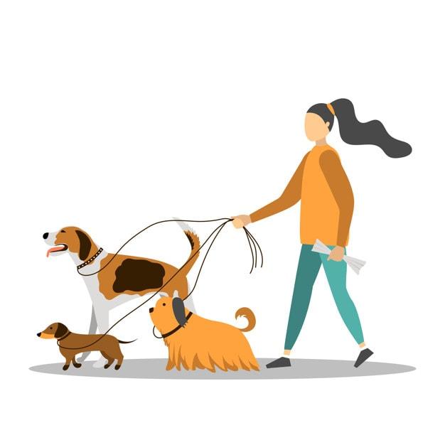 Собачник и смотритель животных | Начать бизнес